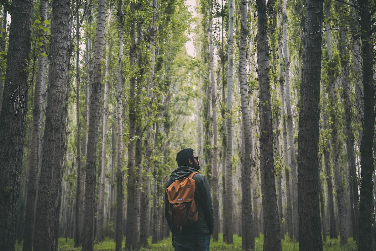 Backpacker looking up at trees while on a hike in the forest. Photo by Oziel Gomez via Pexels.
