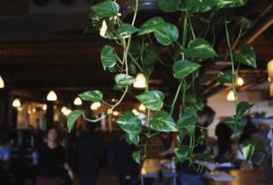 Hanging vines in the CSI Annex location.