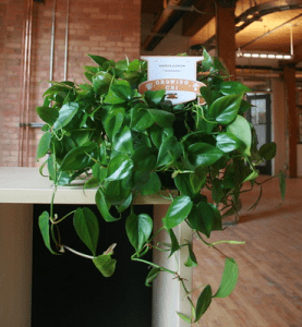 Plant from Plant Drive sitting on desk