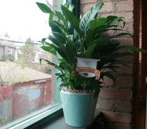 Plant from the Plant Drive sitting on windowsill