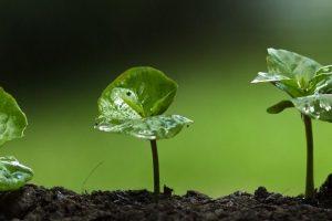 Community_bond_growth